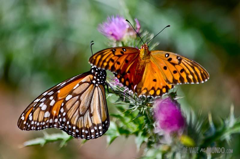 el-palmar-mariposas