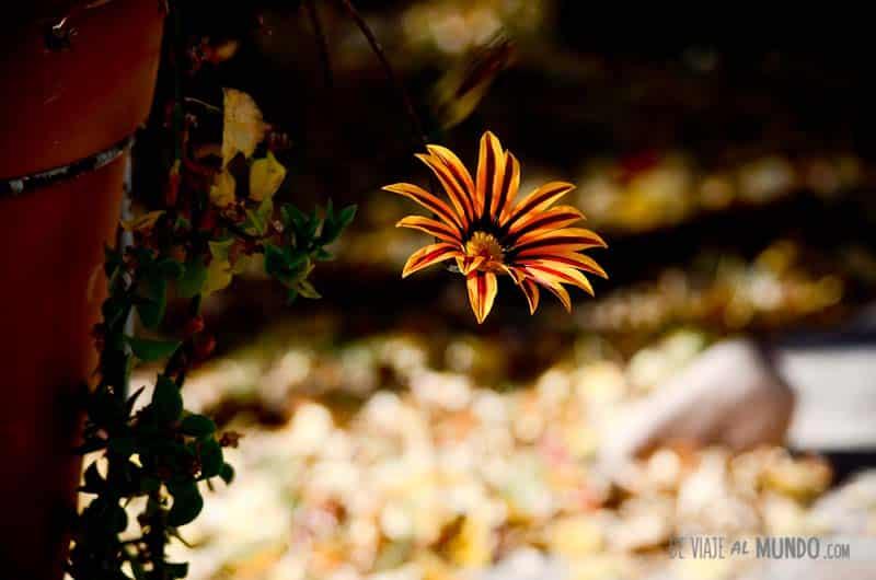 flor-otoño