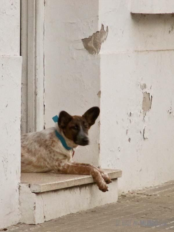 gualeguaychu-perro