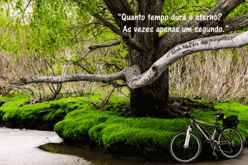 Foto postal árbol berisso
